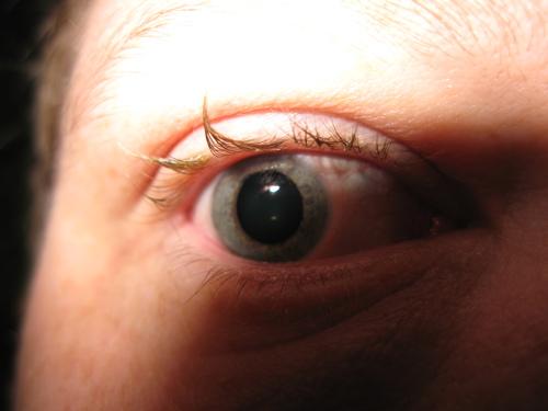 pink eyed gord